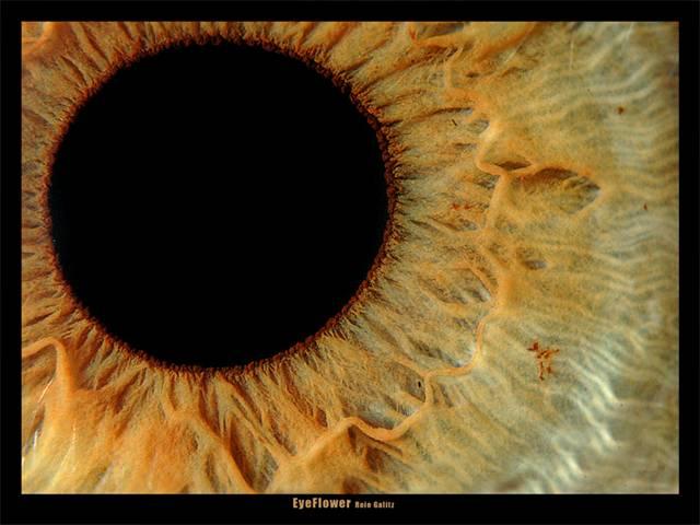צולם עם 3 טבעות הארכה ופילטר מקרב (Close-up lens) 10+ של B+W. זו עין אנושית.