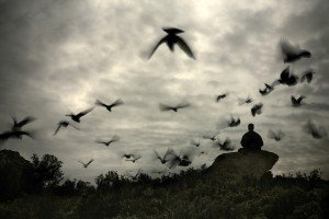 gilad birds
