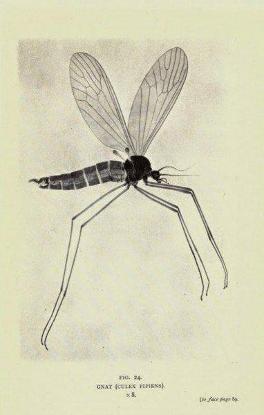 מאקרו היסטורי 1909