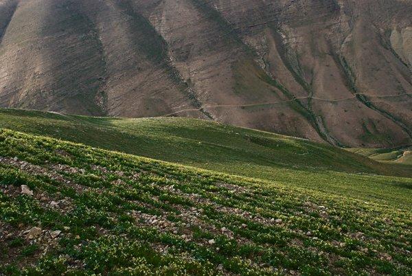 מורדות מוריקות לצד הציה.סרבטה, הרי מדבר השומרון המזרחי.צלם:יובל פדר