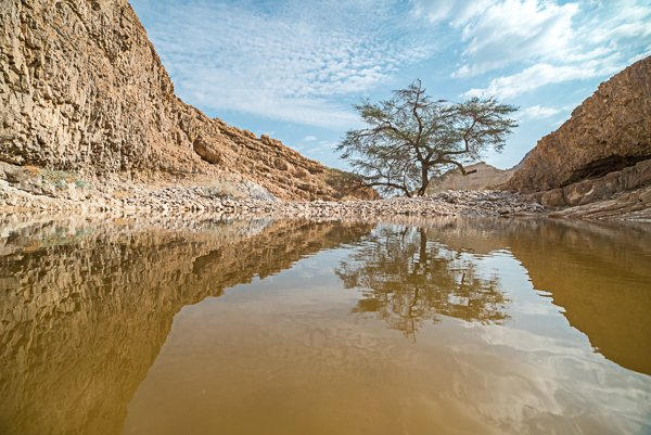מים בלב מדבר בנחל זוהר. צלם יובל פדר