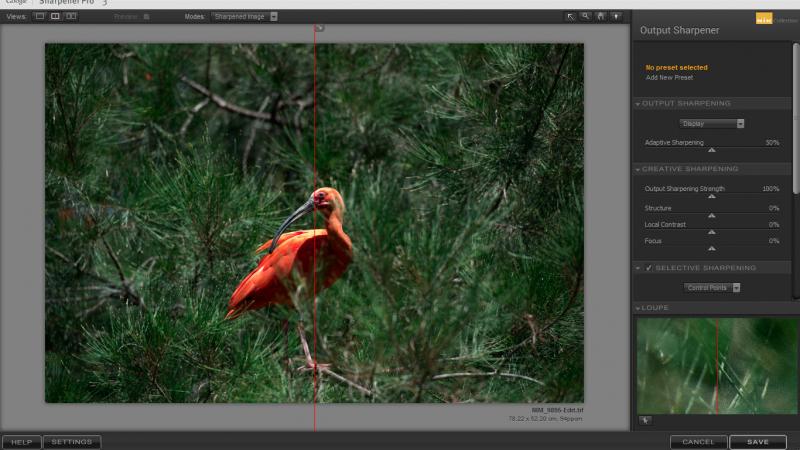 לחצו על התמונה על מנת לראות את סרטון ההדרכה של אד גרגורי מהערוץ Photos In Color