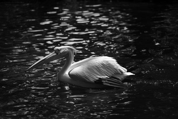 """פיצוי חשיפה שלילי ויש לכם תמונת שחור לבן בסגנון """"low key"""". צלם: נמרוד סונדרס"""